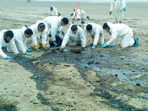 Hundreds of employees and volunteers work to clean up the oil spill caused by Rena.