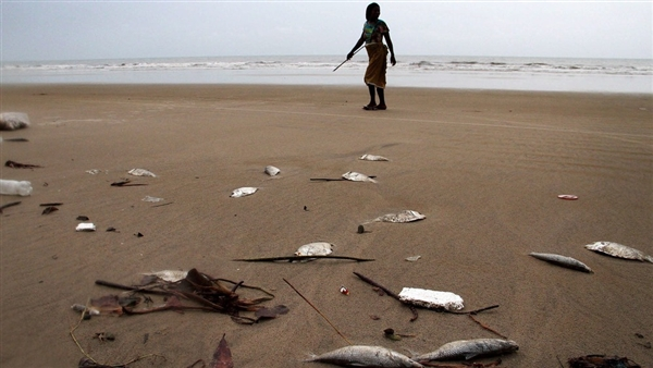 A woman walks past some of the hundreds of dead fish believed to have been killed as a result of the recent oil spill off the coast of Nigeria.