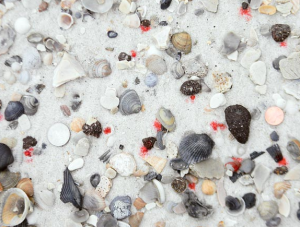 A photo from Auburn University researchers shows various sized tarballs (marked with red dye) that they saw during a field survey of Gulf beaches this year.
